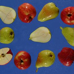 Linee di lavorazione della frutta senza nocciolo
